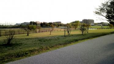 武蔵野の森公園-38