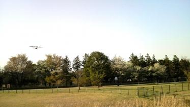武蔵野の森公園-39