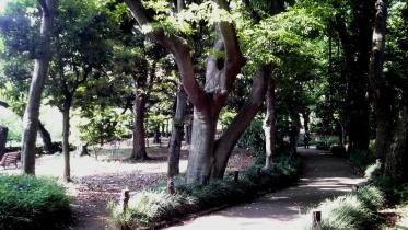 北の丸公園01-19