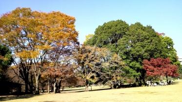 砧公園大蔵01-13