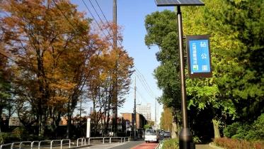 砧公園大蔵01-16