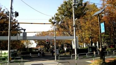 砧公園大蔵01-17