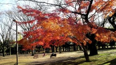 代々木公園周辺02-12