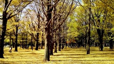 代々木公園周辺02-14