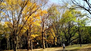 代々木公園周辺02-15