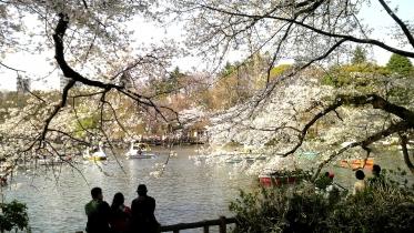 井の頭公園01-19