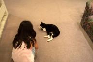 カーリーヴィレッジのネコ「Jack」ちゃん