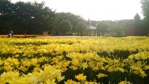 fukaya-green-park-02_20140818115633582.jpg