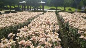 fukaya-green-park-04_20140818115637033.jpg