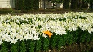fukaya-green-park-05_201408181156434ac.jpg