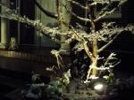 snow2014-01.jpg