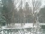 snow2014-05.jpg