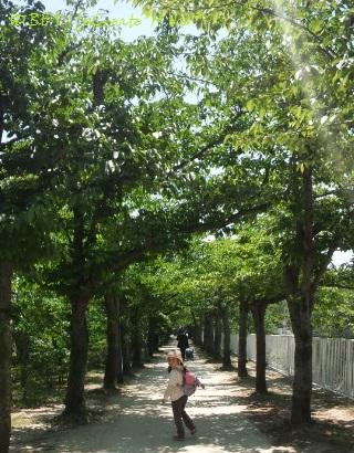 休日に、桜並木でおさんぽ♪