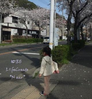 桜並木がもうすぐ満開です♪