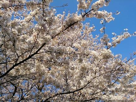 2014一目千本桜①