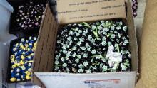 ハワイアン雑貨Locottsu-201204041728000.jpg