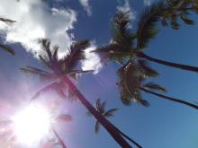 ハワイのパームツリー