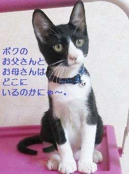 IMG_8986[1] (2)