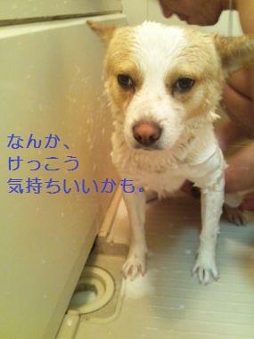 t_DVC00035.jpg