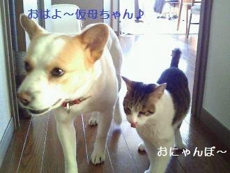 t_NEC_2139.jpg