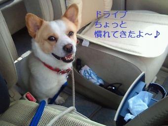 t_NEC_2183.jpg