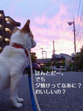 t_NEC_2206.jpg