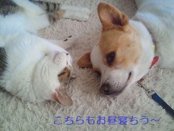 t_NEC_2218.jpg