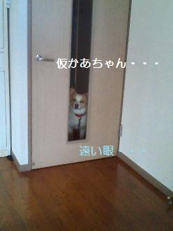 t_NEC_2309.jpg