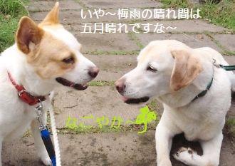 t_NEC_2478.jpg