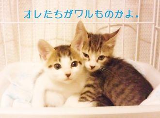 t_NEC_2511.jpg