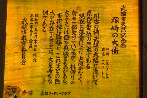 260216 塚崎の大楠3