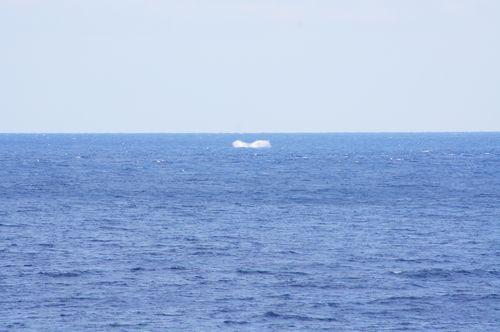 260323 クジラ12
