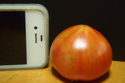 260325 トマト4