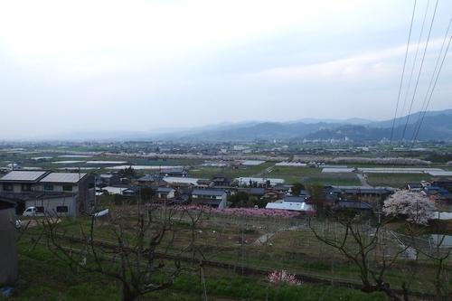 260328 浮羽巨瀬川桜並木23