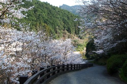 260328 石坂トンネル4