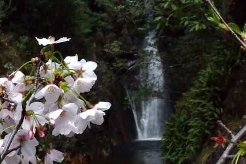 260330 暁嵐の滝20
