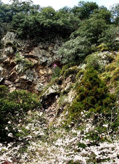 260330 暁嵐の滝17