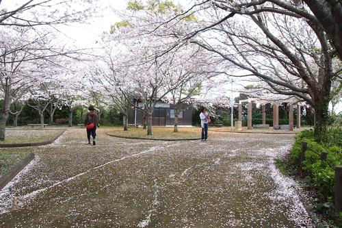 260330 瀬会公園5
