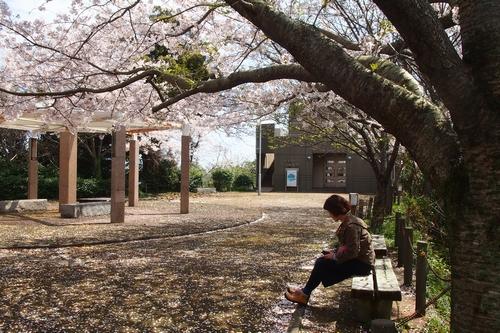 260330 瀬会公園19