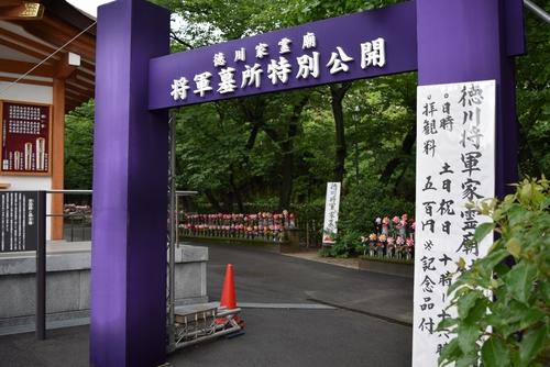 260627 増上寺11