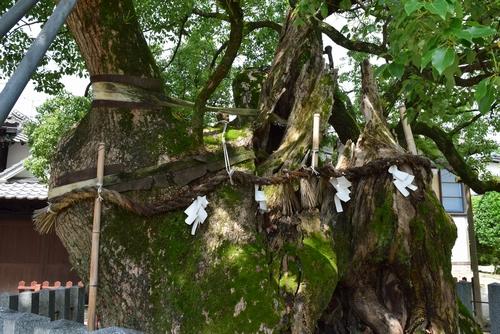 260711 櫛田神社6