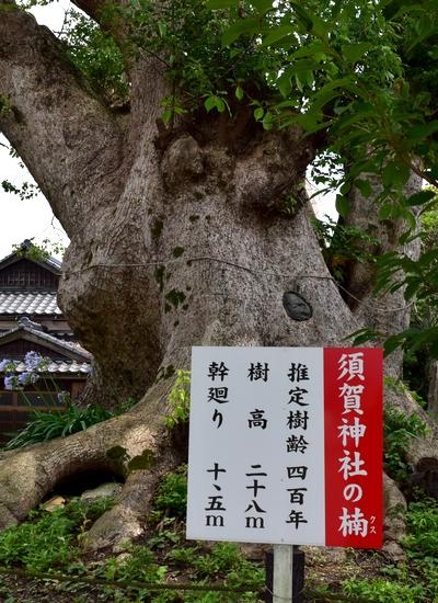 260711 須賀神社5