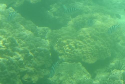 260721 半潜水船9