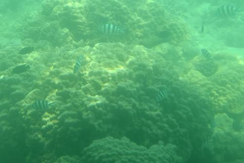 260721 半潜水船10