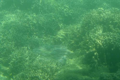 260721 半潜水船11
