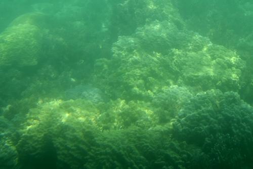 260721 半潜水船12
