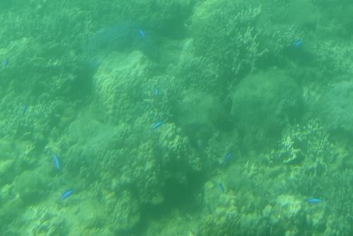 260721 半潜水船13