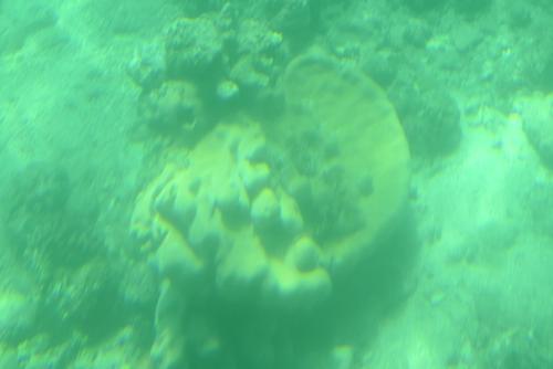 260721 半潜水船18