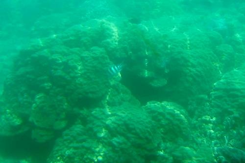 260721 半潜水船24