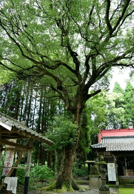 260906 稲佐熊野座神社9
